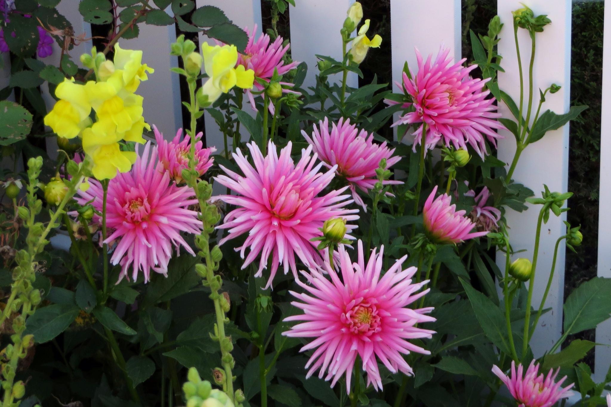 Flower Choices Jims Garden World