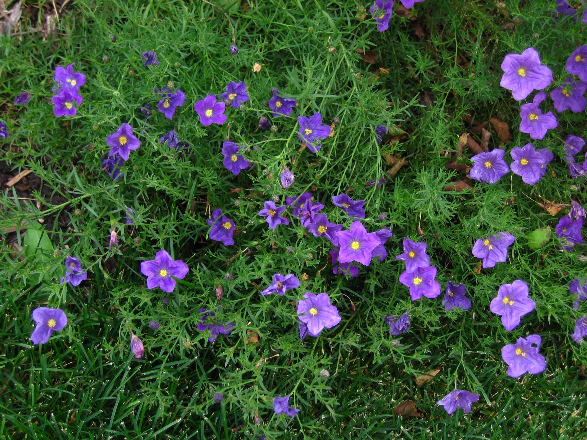 Other annuals jims garden world izmirmasajfo